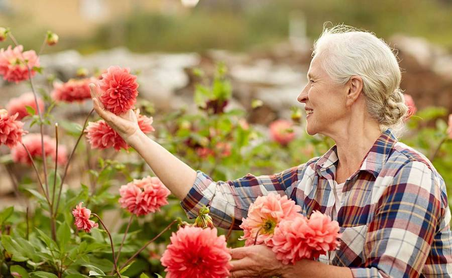 A mature woman picks red flowers in a field, representing the improved quality of life that can be gained from Alzheimer's treatment.