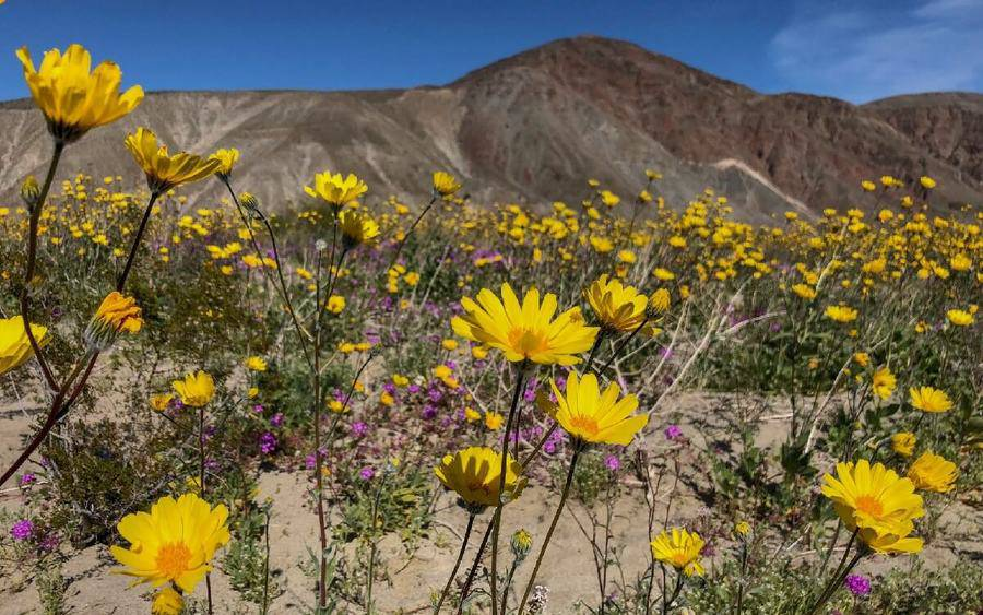 Desert plans that can set off allergies.