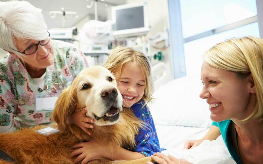 A volunteer, pet therapy dog, mother and child enjoy a special moment together in the hospital