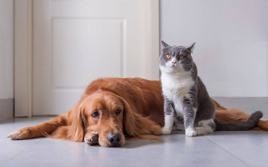 A dog and a cat sitting next to each other in a home.