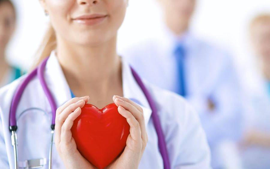 A doctor holds a toy plastic heart.