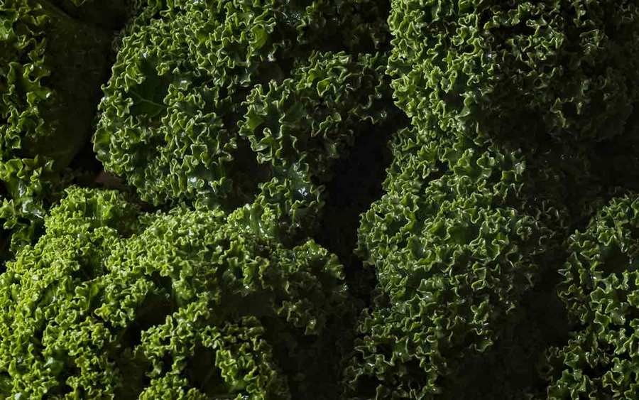 Dark green kale leaves represent the types of superfoods you can plant in your garden.