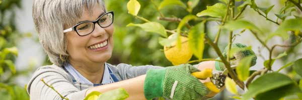A smiling woman uses clippers to trim a lemon tree after successful occupational therapy services with Scripps Health.