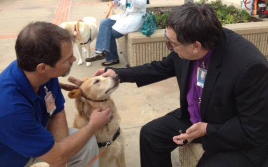 The pets who volunteer at Scripps Memorial Hospital in San Diego were honored for their work at a pet party at the hospital.
