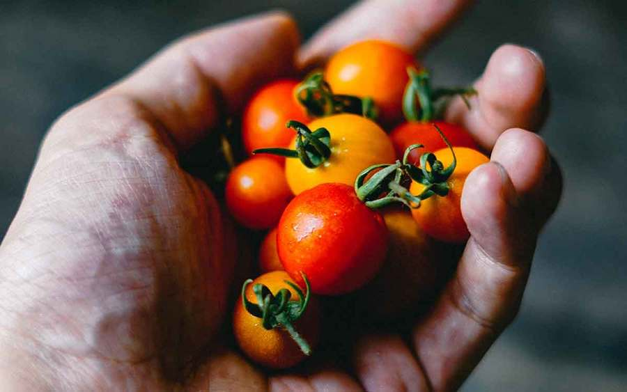 A handful of red and yellow cherry tomatoes represents the types of superfoods you can plant in your garden.