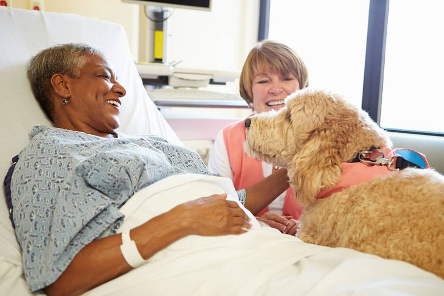 Patient in hospital bed with volunteer and therapy dog