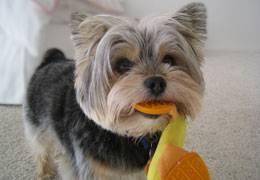 Pet Therapy ENews 260 x 180